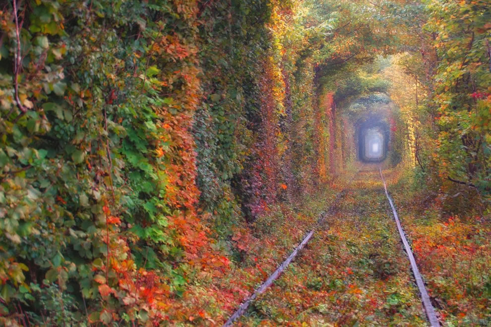 autumn tunnel of love