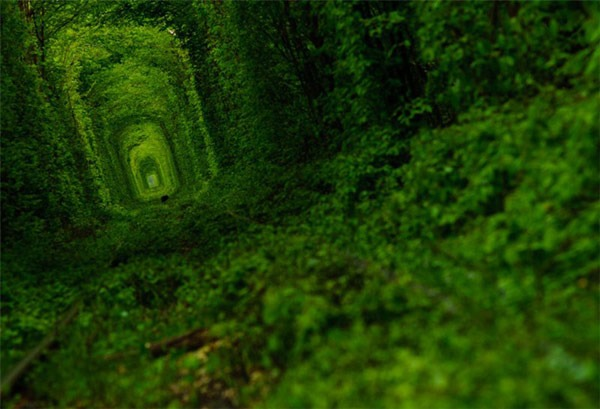 green tunnel of love