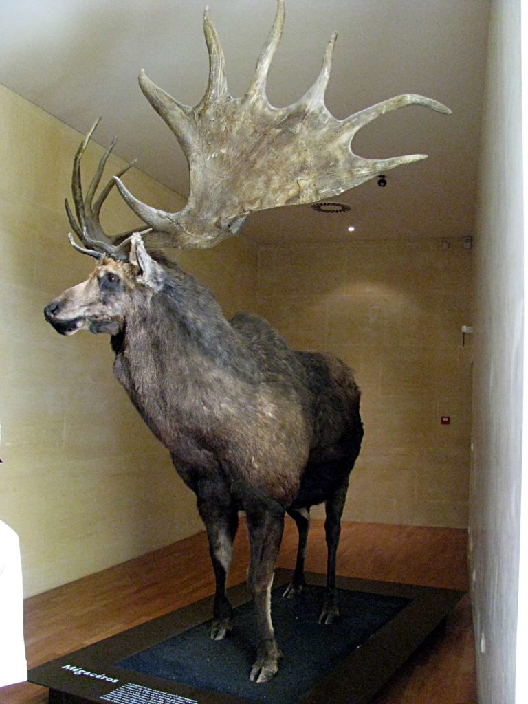 Irish Deer Extinct animals