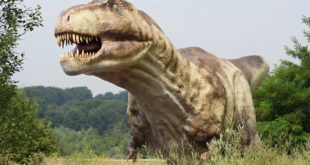 Tyrannosaurus Rex Extinct animals
