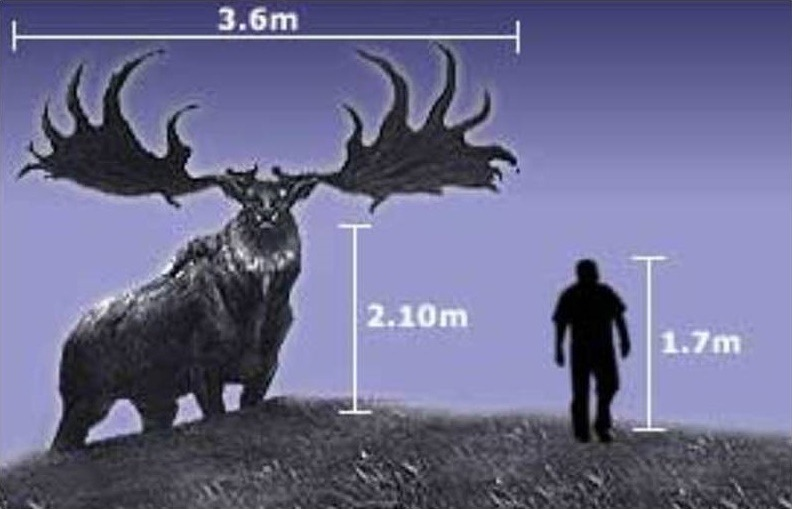 Irish Elk deer